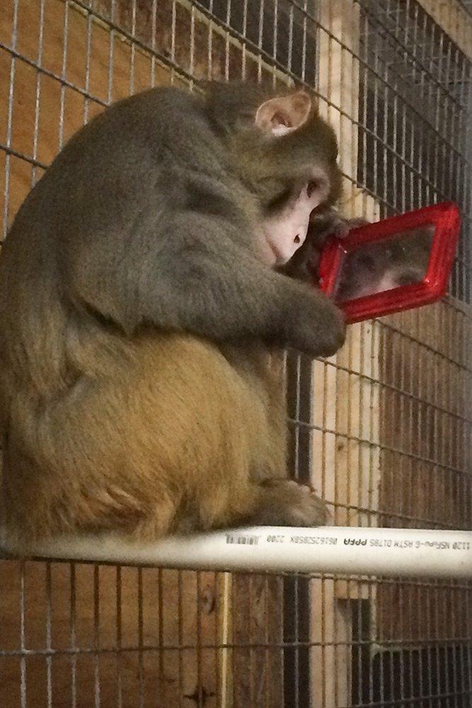Mars / Rhesus Macaque